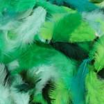 Plumes colorées 10 g - Vert