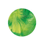 Plume décorative 3-10cm sachet de 10 assorties - Vert